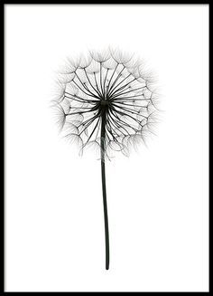 Poster with black and white photograph of a dandelion. Poster with black and white photograph of a dandelion. The post Poster with black and white photograph of a dandelion. appeared first on Fotografie. Black And White Posters, Black And White Prints, Black White Art, Black And White Drawing, Pretty Black, Desenio Posters, Poster Prints, Art Prints, Poster Poster