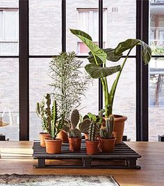 Pallet Plant Stand - neat way to display plants in an urban home!