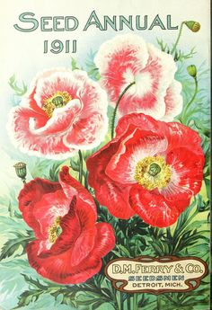 D.M. Ferry & Co,'s - Seed annual, 1911