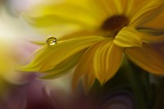 Vilma sol gifs animated pinterest song of my soul by juliana nanvia iftemppicpinned flower photographypretty mightylinksfo Images