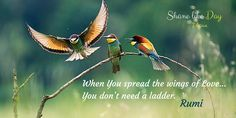 When YOᘮ spread the #wings of Love YOᘮ don't need a ladder. <3<3