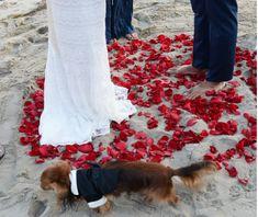 California beach wedding, pets, elopement