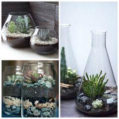 La Buhardilla - Decoración, Diseño y Muebles: Decorando con: Cactus y suculentas, una muy buena opción