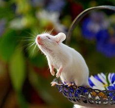 so sweet white mouse)))