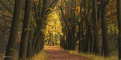 colorful - #GdeBfotografeert Autumn Leaves, Colorful, Explore, Plants, Cabin, Fall Leaves, Autumn Leaf Color, Plant, Planets