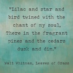 """Lilac and star and bird twined with the chant of my soul. There in the fragrant pines and the cedars dusk and dim."" --- ""Leaves of Grass"" by Walt Whitman"