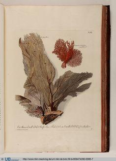 Georg Wolfgang Knorr, Deliciae Naturae Selectae, 1766. Nuremberg.