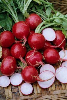 Radish Seeds - 'Champion' Radish Seeds - One of America's Favorites !- Organic.