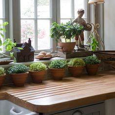 Herbs on the windowsill-wish I wasn't such a brown thumb Thompson