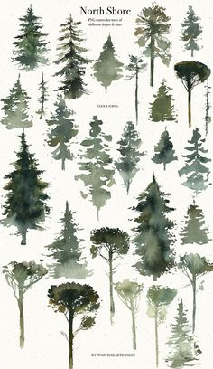 North Shore storyteller is a vintage book style watercolor collection of illustrations, which created to help you to tel Tree Watercolor Painting, Watercolor Painting Techniques, Watercolour Tutorials, Watercolor Flowers, Painting & Drawing, Simple Watercolor, Tattoo Watercolor, Watercolor Animals, Watercolor Background