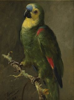 Otto Eerelman[Dutch, 1839-1926] -Blue-fronted Amazon (Amazona aestiva