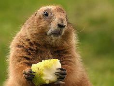 <3  marmots
