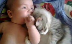 激萌え必至! 赤ちゃんのことが好きで好きでたまらないニャンコの戯れにメロメロ〜