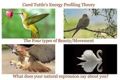 Carol Tuttle's Energy Profiling System. Hah, I like the birds, pretty accurate representations.