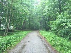 Regen im Wald, aber kein Regenwald. I