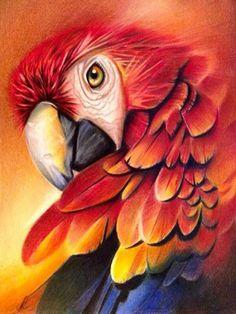 Parrot Drawing, Parrot Painting, Painting & Drawing, Animal Paintings, Animal Drawings, Polychromos, Color Pencil Art, Cool Pets, Bird Art