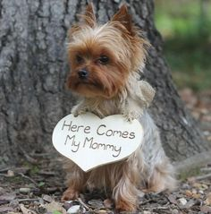 Puppy Sign Here Comes my Mommy Dog Flower Girl by MichelesCottage Chanel lipstick Giveaway
