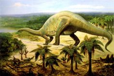 evolution theory essay