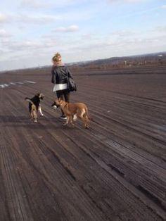 Biete erfahrene Hundebetreuung an ! in Essen