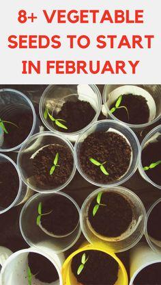 Garden Soil, Garden Seeds, Lawn And Garden, Edible Garden, Growing Broccoli, Growing Vegetables, Growing Cauliflower, Growing Zucchini, Regrow Vegetables