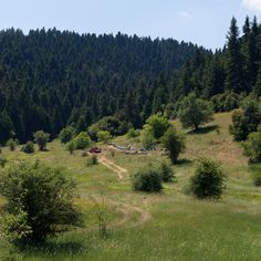 Beehives in Greek Forest