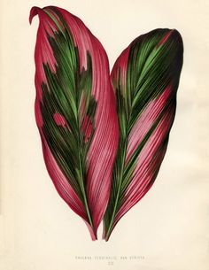 Free Tropical Leaves Image! - 1860's Ornamental Plant Print - The Graphics Fairy