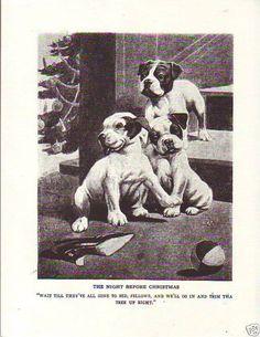 Pit Bull and Boston Terrier 1925 Robert Dickey