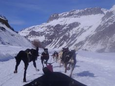 Dog sledging in Val d'Isere