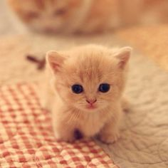 baby kittens, kittens cutest, cats and kittens, baby animals Cute Baby Cats, Cute Little Animals, Cute Funny Animals, Funny Cats, Kittens Cutest Baby, Small Animals, Cute Pets, Fat Animals, Baby Pets