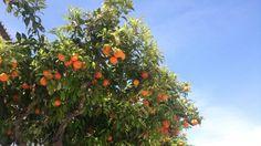 Faro, Portugal, by Lisa Faro Portugal, Lisa, Trees, Plants, Tree Structure, Plant, Wood, Planets
