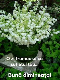 lily of the valley bouquet. Love these flowers Planting Flowers, White Flowers, Plants, Beautiful Flowers, Valley Flowers, Lily Of The Valley Flowers, Love Flowers, Flowers, Beautiful Gardens