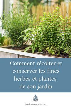 """Le plaisir de voir les plantes de son jardin pousser est parfois accompagné d'un petit stress de """"qu'est-ce que je vais faire avec ça"""", un peu comme si nous devions absolument faire quelque chose avec puisque nous l'avons planté. Sachez que vous ne plantez jamais un jardin pour rien, même si vous n'avez rien cueilli. Vous avez créez une biodiversité dans la nature. Si vous êtes prête à récolter les plantes de votre jardin, découvrez les bons moments pour cueuillir les plantes de son jardin. Nature, Herbs, Gardens, Plant, Herb, Nature Illustration, Off Grid, Mother Nature, Spice"""