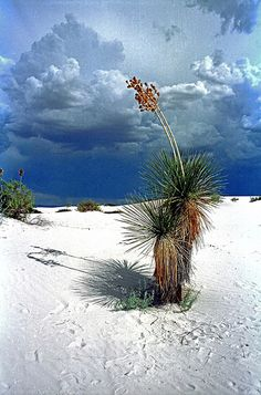 Before the storm - White Sands National Monument, New Mexico, US