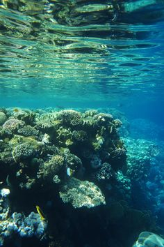 If I could live here - Unterwasserfotos aus Ägypten mit vielen bunten Fischen. Jetzt auf belle-melange.com
