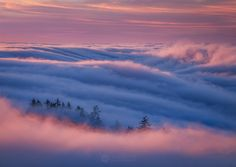 Lost in Thought - Fog flowing over ridges and through forests in Marin County, CA, at sunset.  Fog forecasted by #escaype. Happy #EscaypeDay! You all are blowing my mind. Can't believe the amazing shots that everyone's been putting out, and I'm humbled to say our service is a small part of those final pieces :)  Interested in an invite? Send me a message ;)  www.escaype.com