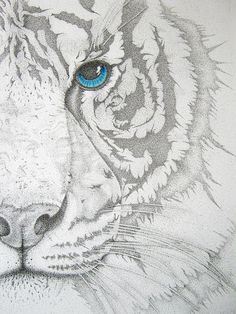 Amazing: Eye of the Tiger
