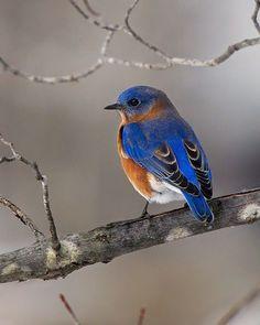 Beauty is my muse Small Birds, Little Birds, Colorful Birds, Pretty Birds, Beautiful Birds, Bird Barn, Barn Owls, Eagle Bird, Bald Eagle
