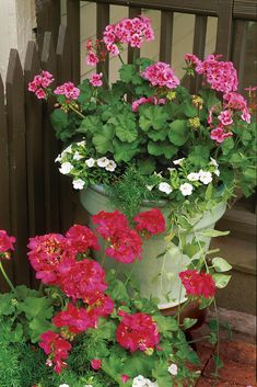 RX_Plant Geraniums in Containers