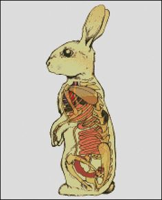 Vintage Rabbit Anatomical cross stitch pattern von OlgaArtStitch