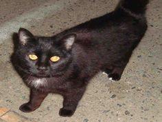 www.PetHarbor.com pet:TULR.A161978