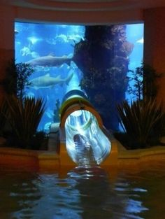 Water slide through exotic fish tank. That would be scary and awesome at the same time. My Personal Swimming Pool/ Shark Tank!!
