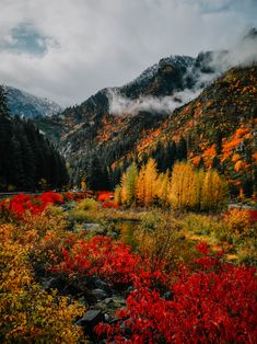 A Fall Day in Leavenworth - The Sweet and Simple Kitchen Autumn Day, Fall, Weekend Activities, Pacific Northwest, North West, Colorado, Road Trip, In This Moment, Places