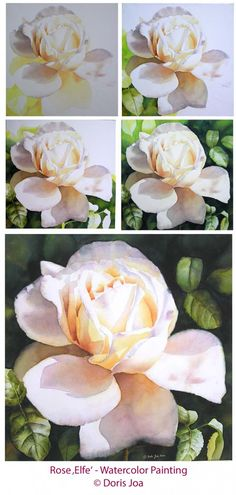 paint creamy white roses in watercolor and oil. I paint each petal separately and start always at the base of the flower. I never start with the petals in light because I want to start early with colours.