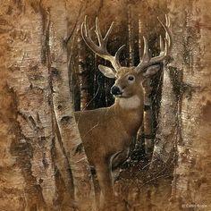 Фото Олень в лесу, художник - Collin Bogle