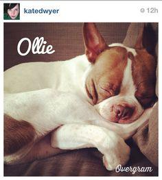 Ollie, the dog!