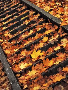 steps of autumn