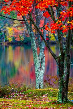 Colors of Fall - Mountain Springs Lake, Pocono, Pennsylvania, USA.