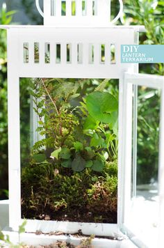 Make a terrarium centerpiece from a ikea Borrby lantern, then after the wedding use them to decorate your porch