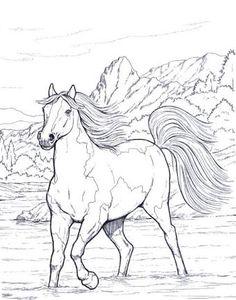 Resultado de imagem para desenhos cavalos selvagens