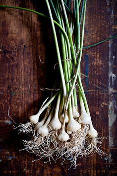 Wild Garlic by tartelette, via Flickr.